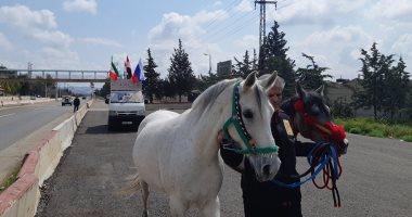صور.. رحالة سورى يبدأ رحلته من دمشق إلى موسكو على ظهر حصان