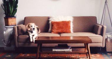 لو عندك حيوان أليف.. إزاى تحافظ على نظافة البيت وتحمى نفسك من الأمراض؟
