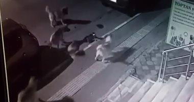 القطة الشجاعة خلال مهاجمة الكلاب