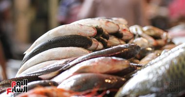 شعبة الأسماك: استقرار الأسعار فى الأسواق والبلطى يسجل 26 جنيها -
