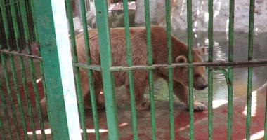 """الدب الروسى الجديد يجذب زوار حديقة الحيوان.. والمدير: حصلنا عليه بنظام """"البدل"""""""