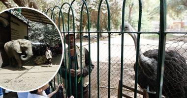 حديقة الحيوان تجذب المواطنين بشم النسيم.. فريق لإعادة الأطفال التائهين وأكياس قمامة بالمجان.. تفاعل كبير مع الدب الروسى.. ومدير الحديقة: وقف الإجازات وأكثر من 70 ألف زائر حتى الآن.. و100 مليون صحة تثبت حضور