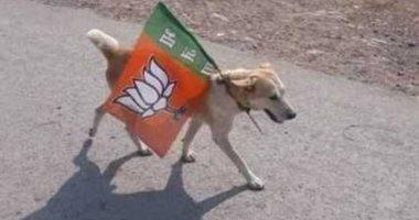 اعتقال كلب فى الهند بسبب الانتخابات العامة...اعرف القصة