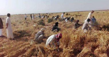 بدء استلام تقاوى 4 محاصيل شتوية بـ6 محافظات استعدادًا للموسم الجديد