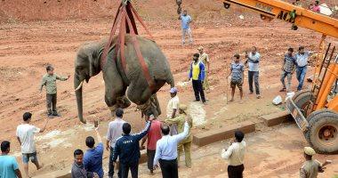 كان زهقان شوية.. فيل يتجول فى مدينة هندية يسبب الذعر.. صور