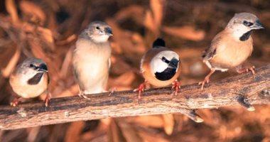 احذر من تربية الطيور فى المنزل.. تنقل أمراضا تهدد صحتك اعرفها