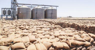 استلام 3 ملايين و174 ألف طن قمح محلى من المزارعين