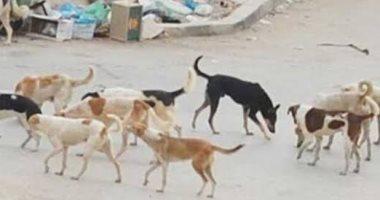 قارئ يشكو من انتشار الكلاب الضالة بشوارع منطقة السيدة زينب