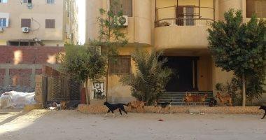 قارئ يشكو من انتشار الكلاب الضالة بالمعراج المعادى