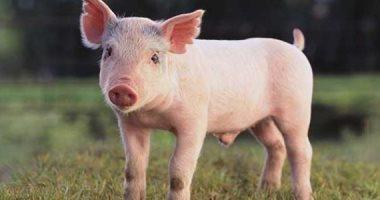 العلماء يختبرون مدة بقاء كورونا على العملات الورقية وجلود الحيوانات.. دراسة:الفيروس يعيش 4 أيام على جلد الخنزير فى درجة 22 مئوية.. وتقل المدة لـ 8 ساعات عند درجة 37.. ومخاوف من نقل مصانع اللحوم المجمدة للفيروس