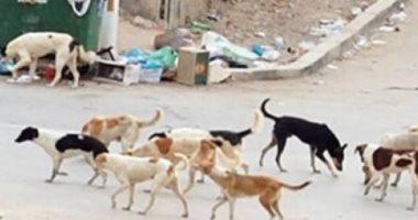 شكوى من انتشار الكلاب الضالة بمجاورة 53 بالعاشر من رمضان