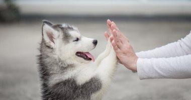 هذه الكلاب يمكنها اكتشاف المرض لدى البشر