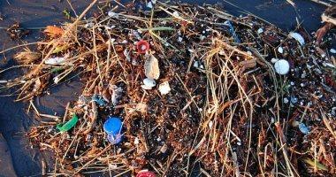 التلوث البلاستيكي فى المحيطات يضر بالبكتيريا المنتجة لـ 10٪ من الأكسجين