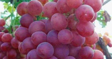 دلع جسمك..العنب هيقوي مناعتك ويحافظ علي صحة القلب