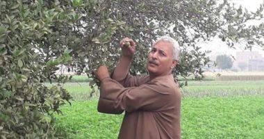 نقابة الفلاحين: تراجع أسعار الخضروات والفاكهة بسبب عرض إنتاج الصوب الزراعية
