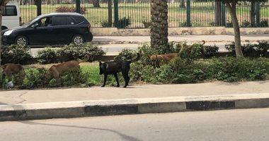 استمرار أزمة الكلاب الضالة بشارع أحمد فخرى فى مدينة نصر