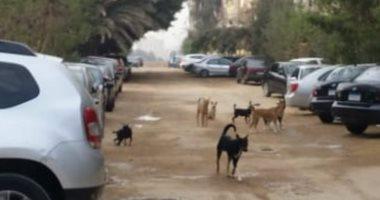 شكوى من انتشار الكلاب الضالة بشارع العشرين فى فيصل