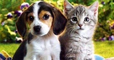 ليك من حيوانك نصيب.. صفات يتركها الكلاب والقطط فى أصحابهم