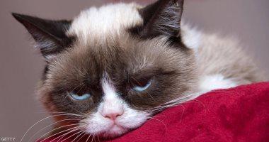 """""""القط المليونير"""" يفارق الحياة ويترك ثروة تقدر بـ 900 ألف دولار أمريكى"""