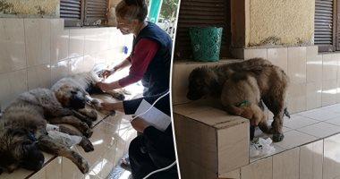 صور.. موضة مراكز رعاية الحيوانات الأليفة.. قص الأظافر بـ20 جنيها وتنظيف الأذن بـ50 والكشف بـ25 والتطعيمات تبدأ من 160 جنيها والسعار مع الرخصة بـ70.. بيطرى الجيزة: لدينا 65 وحدة لرعاية الحيوانات والتحصينات مدعمة