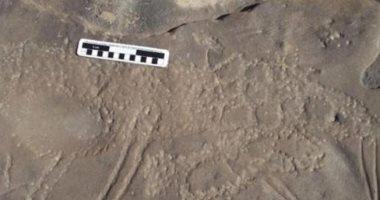 شاهد..آلاف من نقوش العصر الحجرى تكشف اهتمام المصريين القدماء بالحيوانات