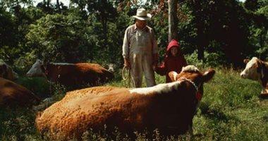"""حمى """"Q"""".. تهديد جديد لصحة الإنسان بسبب الماشية"""