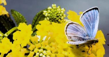 ربيع الأمل.. الفراشات تتحدى كورونا الكئيبة وتشهد زيادة كبيرة فى الأعداد