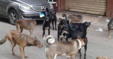بيطرى الوادى الجديد تشن حملات مكافحة ضد الكلاب الضالة بالمراكز والقرى