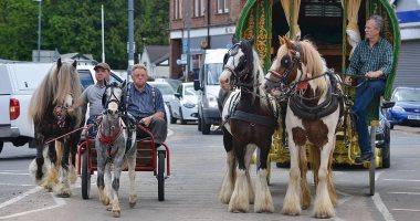 شاهد.. عربات الخيول فى فيينا من وسيلة سياحية لأداة لنقل الطعام فى زمن كورونا