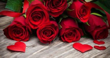 بمناسبة يوم الورد الأحمر.. اعرف رسائله ومعانيها بين المحبين