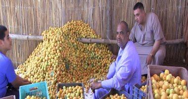 """""""الزراعة"""" تحدد 7 توصيات لمزارعى الخوخ والمشمش والبرقوق لزيادة الإنتاج"""