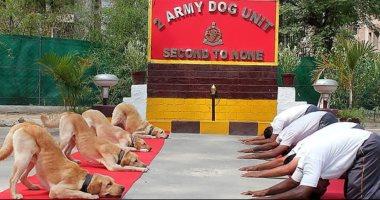"""شاهد كيف احتفل الكلاب في الهند بيوم اليوجا العالمى  """"صور"""""""