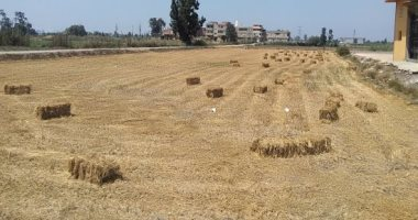 """""""الزراعة"""" برامج وحملات توعية لمزارعى الأرز بأهمية تدوير قش المحصول"""