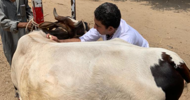 الزراعة: تحصين أكثر من 2.4 مليون رأس ماشية ضد مرض الحمى القلاعية حتى الآن