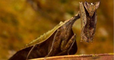 صور.. قصة اكتشاف كائنات منقرضة فى مدينة القرد الضائعة بغابات هندوراس.. فريق علمى وجد مركزا متنوعا للحياة البرية بعد عقود من البحث.. وتسجيل 246 نوعًا من الفراشات و30 من الخفافيش.. و57 من البرمائيات والزواحف