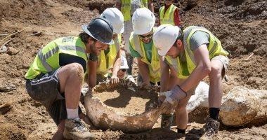 الحفريات المكتشفة