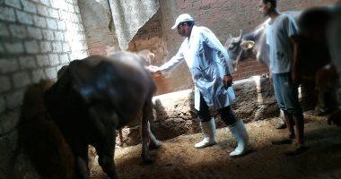 الزراعة :تسهيلات للحصول على رخص تشغيل حظائر الماشية التسمين والحلاب