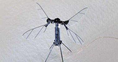 """صور.. روبوت """"نحلة"""" يرفرف 170 مرة فى الثانية ويراقب البيئة"""