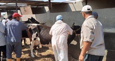 9 أعراض لإصابة الأبقار والجاموس بالحمى القلاعية.. تعرف عليها