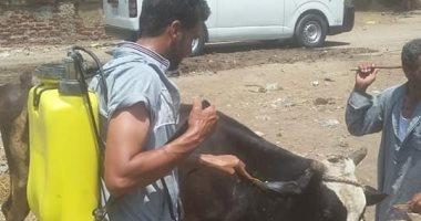 صور.. تحصين 124 ألف رأس ماشية ضد الحمى القلاعية والوادى المتصدع بكفر الشيخ