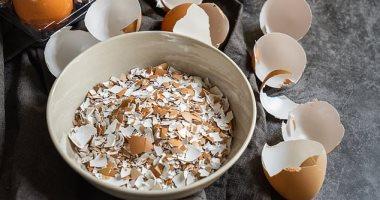 أطباء يستخدمون قشر البيض لإعادة نمو عظام وأسنان المرضى