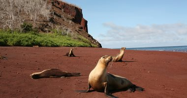 مياه ساخنة ورمال حمراء.. أغرب أنواع الشواطئ فى العالم
