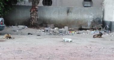 صور.. رواد محطة الأتوبيس بمدينة دمياط يشكون انتشار الكلاب الضالة