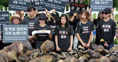 ارحموا الحيوان.. مظاهرات فى كوريا الجنوبية ضد تناول لحوم الكلاب.. صور