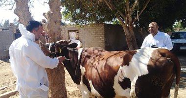 """""""الزراعة"""": تحصين 19.850 رأس حيوان ضد 4 أمراض وبائية بالجيزة"""