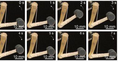 علماء يطورون عضلات اصطناعية للروبوتات لتنفيذ المهام الصعبة