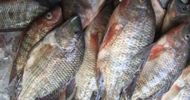 أسعار الأسماك بسوق العبور اليوم.. البورى بـ27 جنيها والبلطى يبدأ من 15جنيها