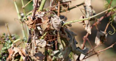 صور.. الجفاف يضرب مئات الهكتارات من الأراضى الزراعية فى فرنسا