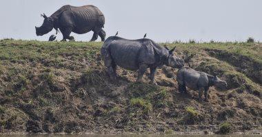 """وزيرة البيئة بجنوب أفريقيا: نتحرك لمكافحة صيد """"وحيد القرن"""""""