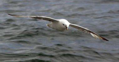 الشرطة تتصدى للصيد الجائر.. ضبط 24 حيوانا نادرا معرضا للانقراض